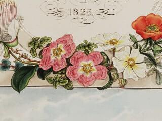 Flora and Fauna Graeca