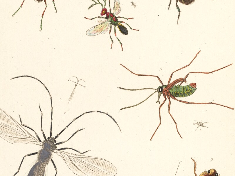 The Entomologist's Useful Compendium